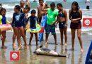 Flota delfín muerto en domingo de mayor ocupación en Acapulco en 2021.